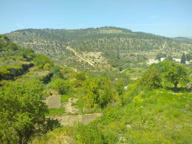 De groene lijn tussen Battir en Israël is duidelijk te zien aan de begroeiing (foto: Sylva van Rosse)