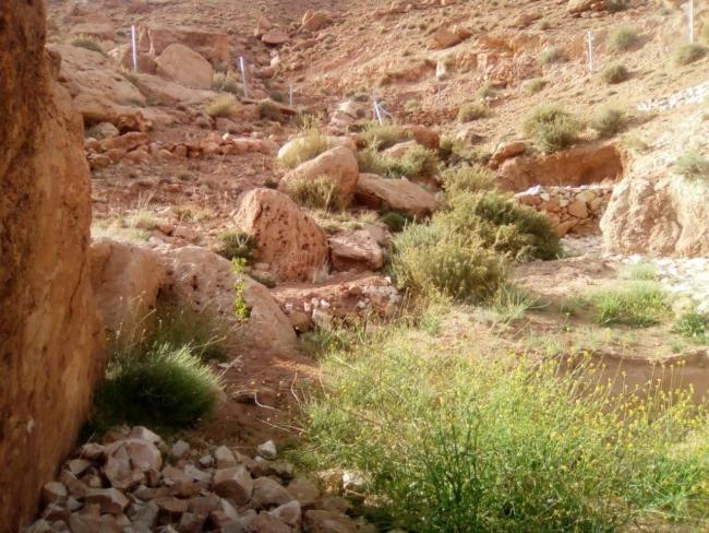 Een geul met natuurlijke begroeiing, mogelijk doordat de gabion water vasthoudt.