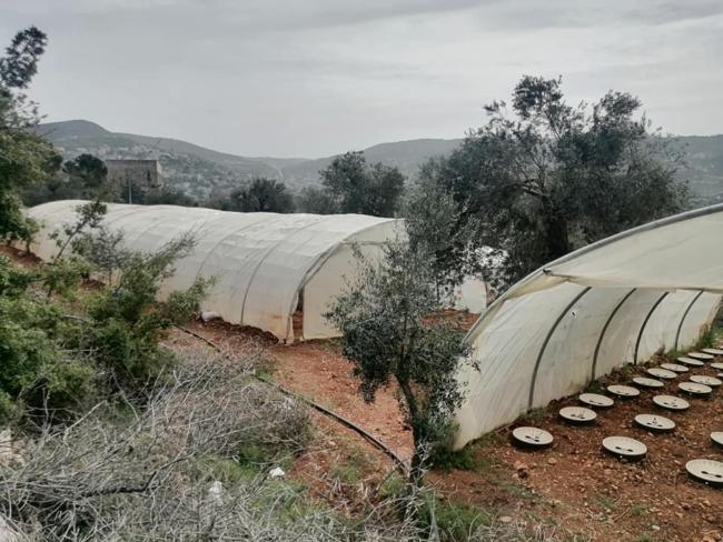 Jonge boompjes in Ajloun